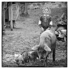 The Beauty & the Beasts (DomiKetu) Tags: bw white black girl monochrome beauty square lumix mono pig mud farm candid panasonic pigs beast format beasts carre fz38 fz35 outstandingromanianphotographers