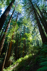 Redwood Forest (andreaskoeberl) Tags: sanfrancisco california trees green nature northerncalifornia forest woods nikon hiking wideangle muirwoods tall redwood 11mm nationalmonument talltrees 1116 d7000 nikond7000 andreaskoeberl
