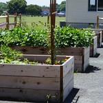 Rehoboth Teaching Garden | 2012-06-24  12-56-34 thumbnail