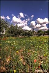 La tierra se pinta se colores (Art.Mary) Tags: trees espaa naturaleza nature field canon andaluca spain rboles champs arbres granada olives campo olivos espagne oliviers gjar