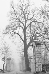 Diramazioni di nebbia (Riccardo Brig Casarico) Tags: light italy mountains fog wow photography photo reflex nikon europa europe italia colours foto fotografia colori montagna atmosfera luce brig 18105 riki d5100 brigrc