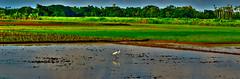 Heaven on the EARTH (Kumar Prasant) Tags: blue sky plants cloud india flower green nature water field rain landscape leaf egret villagesite woterdrops nikond3100 sunlightlandscapenaturegreenplantsflowerleafskycloudbluenikond3100egretindiafieldvillagesitewoterdropsrainwatersunlight