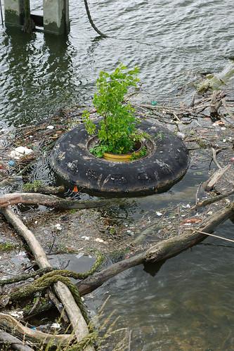 Plante en pot dans la tourmente