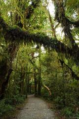 Walk to Roaring Billy (NathanaelBC) Tags: newzealand green forest canon moss track walk trail lichen dslr westcoast canonefs1755mmf28isusm 400d