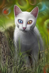 Hypnosis (Ben Heine) Tags: park pink blue light portrait pet baby white plant blur cute green art nature face grass animal silhouette yellow closeup composition cat canon mouth garden hair fur nose photography stem eyes kat funny chat colorful zoom sweet tunisia pavement couleurs details ears moustache special fantasy albino series mad fangs psychedelic sousse genetic blanc whitecat kot turkish fang domesticcat muzzle hypnosis trottoir armenian kleuren 200mm museau tige hypnose almondshapedeyes vancat teleobjectif benheine hasdrubal landrace 5dmarkii differenteyecolors