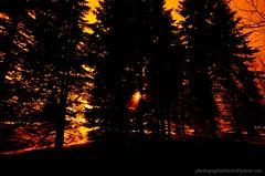 (M.Dionne) Tags: nature fleur automne de soleil nikon noir coucher ile qubec paysage et blanc verte fisheyes d7000