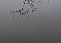 _MG_1578R She Spread Her Wings Around Me, Enlightenshade, Jon Perry, 13-3-14 (Jon Perry - Enlightenshade) Tags: london branch riverside foggy chiswick w4 strandonthegreen 13314 jonperry riverinthefog overhangingbranch enlightenshade arranginglightcom 20130314 shespreadherwingsaroundme branchwithwaterdrops