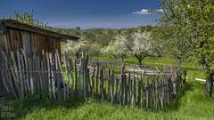 Rustic wood cattle fence (KF-Photo) Tags: zaun 169 pfhle beuren holzlatten holzzaun ziegenstall viehzaun umzunung blhendeobstbume zaunlinien