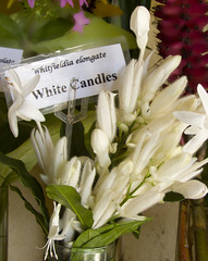 White Candles