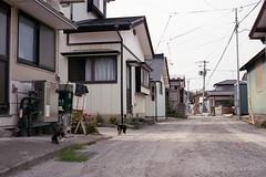 20160424-17 (GenJapan1986) Tags: film animal japan cat island  miyagi   2016     nikonnewfm2   fujifilmfujicolorsuperiapremium400  sabusawajima