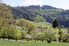 Gundelfingen landscape VI (tillwe) Tags: green landscape spring blackforest tillwe rebberg gundelfingen 201605
