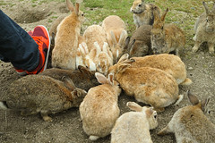 (meme@) Tags: rabbit sigma   dp2merrill
