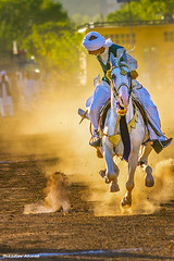 Tent Pegging (Bakhtiar PWR) Tags: life pakistan horse animals sport action dust equine goldenhour gallop islamabad