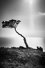 Monolithos No.08 (Sebastian (sibbiblue)) Tags: blackandwhite griechenland greece fineart bw monochrome mastinlab urlaub tree rhodos mai fujixpro2 2016 pfingstferien fujifilm monolithos