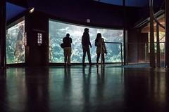 oceanopolis-0443 (STEPHANE COSTARD PHOTOGRAPHIE) Tags: ocean light black reflection aquarium brittany silhouettes bretagne peoples reflet brest parc serie tourisme finistre oceanopolis ratseyeview rasdusol