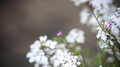 Wildflowers (MarkAnderson2) Tags: canon lens 1d l wildflower llens ef300mmf4lisusm
