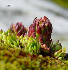 Cadagno - Lago di Dentro 2298 m - Laghetti della Miniera 2524m - Ritom (Photo by Lele) Tags: miniera laghetti di dentro ritom estate 2016 leventina ticino switzerland acqua gelato ghiaccio nebbia aperto panorama cadagno rododendri riflesso