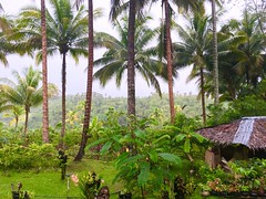 Green Scenery around a provincial Philippine Home (ToGa Wanderings) Tags: trees mountain green home wet beautiful beauty rain rural season island living countryside asia solitude country philippines peaceful palm foliage hut rainy tropical environment after southeast lush simple province mindanao occidental misamis oroquietacity misimisoccidental
