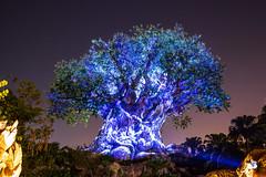 Night time Tree of Life (joe.diebold) Tags: disney disneyworld waltdisneyworld animalkingdom treeoflife disneyafterdark disneyside light lightshow longexposure colors nightshow