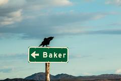 raven on sign