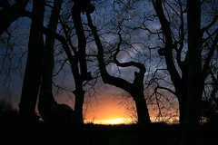 A sunset through the trees (Liam Skelly) Tags: