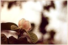 una volta ho regalato fiori di carta  (+1 in comments) (Franz B. Photography ) Tags: flowers light sunset italy color art texture primavera nature canon photography 50mm spring foto bokeh colori trieste controluce fotoritocco goldenhours 1000d