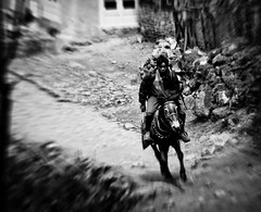 Galloping With Sight And Sound (Hans Maso) Tags: nepal people blackandwhite horse man men nature animal trekking trek canon blackwhite candid ef2470mmf28lusm 2470mm 50d thelittledoglaughed canoneos50d flickraward