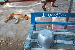 Love - Nyaung U, Myanmar (Maciej Dakowicz) Tags: sea dog love animal bench asia southeastasia sleep burma iloveyou myanmar bagan nyaungshwe