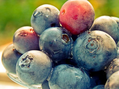 Just Rinsed Blueberries in Late Afternoon Sun (TheG-Forcers (Mike)) stack stacked odc ourdailychallenge