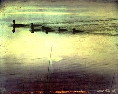 Wood Ducks on Water (Passion4Nature) Tags: sunset lake ducklings textures upnorth ie woodducks sixmilelake tatot magicuniverse magicunicornverybest magicunicornmasterpiece