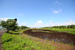 IMG_3491.JPG (tarodepon) Tags: japan aomoriprefecture eyefi inakadate