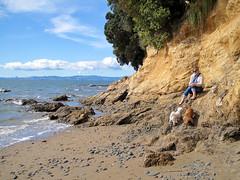 Fleur at Waiti Bay (russelljsmith) Tags: winter newzealand sun playing cute beach dogs water fleur sunshine coast sand shore poppy bella sundaydrive firthofthames 77285mm waitibay