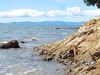 Bella at Waiti Bay (russelljsmith) Tags: winter newzealand dog sun beach sunshine coast sand bella sundaydrive firthofthames 77285mm waitibay