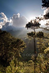 Sagada Tree-D (lagal[og]) Tags: nikon philippines sagada picturesque luzon mountainprovince northernluzon northernphilippines lagalog oggieramos