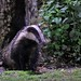 Badger Notts WT (cpt Margaret Holland)