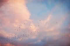 You suddenly complete me (My . December) Tags: camera blue wild sky film nature birds clouds analog 35mm vintage georgia lens landscape photography 50mm md minoltax700 young floating indie roll float expired amateur mydecember fujisuperia400 f17 nikolozjorjikashvili