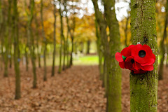 National Memorial Arboretum (JonMorgan.) Tags: world tree love nature loss army death woods memorial war peace sad force iraq wwi wwii birth navy egypt remembrance airforce boar baesystems eventphotography warphotography jonmorganphotography memorialphotography jonmorgancouk