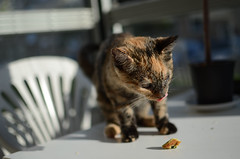 Brunch (rickpatton1) Tags: cats sun animal animals cat balcony sunny gatto gatti gattini