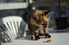 Brunch (rickpatton1) Tags: cats sun animal animals cat balcony sunny gatto gatti gattini