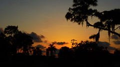 May 14 Sunset (Jim Mullhaupt) Tags: pictures camera pink blue sunset red wallpaper sky orange sun color tree weather silhouette yellow clouds landscape photography gold evening photo nikon flickr sundown florida dusk snapshot picture palm exotic p900 tropical coolpix bradenton geographic endofday cloudsstormssunsetssunrises nikoncoolpixp900 coolpixp900 nikonp900 jimmullhaupt