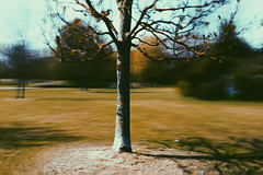 Bluristic app (imageedit) Tags: tree mobile weird phone cam effect android app vsco bluristic