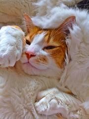 My kitty cat, Mr. Jaspar Jonze, 2016 (JeremiahChristopher) Tags: pet cats pets animals cat kitten kitty kittens whiskers cuddly handsomeboy kittycat orangemustache orangeandwhitetabby jeremiahchristopher animalinnocence