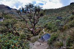 Los Nevados, Eje Cafetero, Colombia (Ben Perek Photography) Tags: santa mountains del america colombia south glacier andes isabel sur iceberg zona eje cafetera cafetero