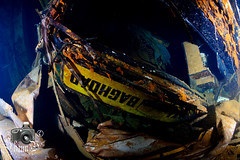 Zenobia Wreck (ShaunMYeo) Tags: cyprus scubadiving wreck cipro zenobia larnaca kipar zypern underwaterphotography kypros kbrs chypre chipre kypr cypr cypern kpur kipr sipra ikelite kipras ciper cipru ciprus xipre siprus   syprus kipra kipro      sp ipru    kupelo sayprus qipro   kpros  cyprum        qibrs    saipurasi      kaiperu sayiprasi