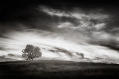 uno árbol en la colina (shutterclick3x) Tags: trees landscape ir countryside infrared backroads infraredblackandwhite frankloose