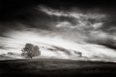 uno rbol en la colina (shutterclick3x) Tags: trees landscape ir countryside infrared backroads infraredblackandwhite frankloose