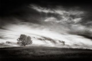 uno árbol en la colina
