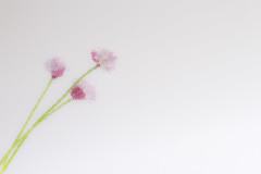 Slip slidin' away (judi may) Tags: pink flowers white minimal whitebackground simplicity stems highkey minimalism simple chives pinkflowers hss sliderssunday