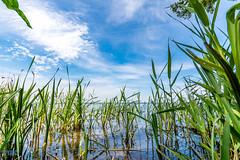zu neuen Ufern (Patrick29985) Tags: lake see meer wasser sommer wolken hannover ufer clowd schilf frhling wolkig niedersachsen weitwinkel steinhude trumen steinhudermeer sigma1020 herrlich sommerlich clowdporn
