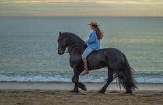 Andalusia (Pieter Mooij) Tags: horse blackhorse amazone